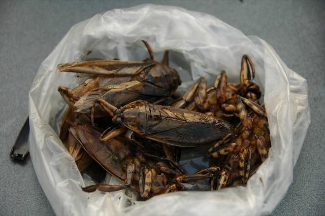 Grilled Bugs - Battambang, Cambodia