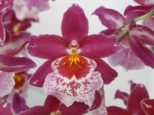 Orqu deas cuidados y cultivo viveroterapia jard n for Cuidados orquideas interior