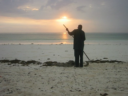 zanzibar sunlight sunrise tanzania matemwe eastafrica beach africa hardwork seaweed sand ocean geotagged geolat4986977 geolon39872131
