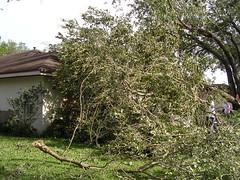 Hurricane Charley Damage -  Tree on Car