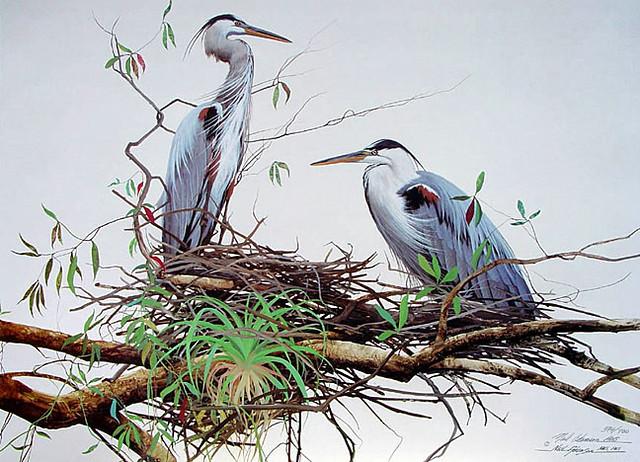 NARP0022NestingG.B.Herons