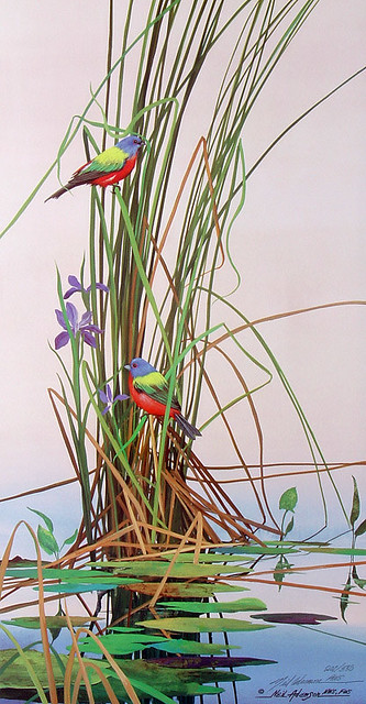 NARP0024PaintedBuntings