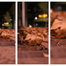 City Leaves Triptych by Noranna