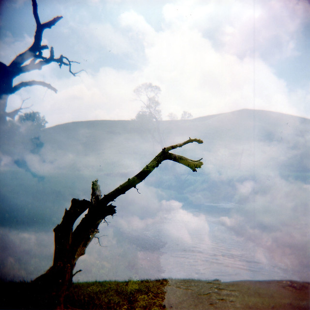 Tree, Multiple Exposure