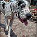 Toronto Dog/People Gathering by shadowplay