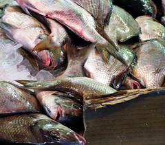 tilapia, animal, fish, fish, seafood, forage fish, food,