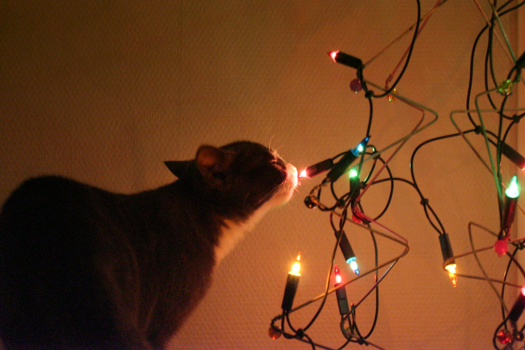 Linus sniffing the wire art christmas tree