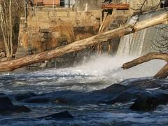Milburnie Dam4