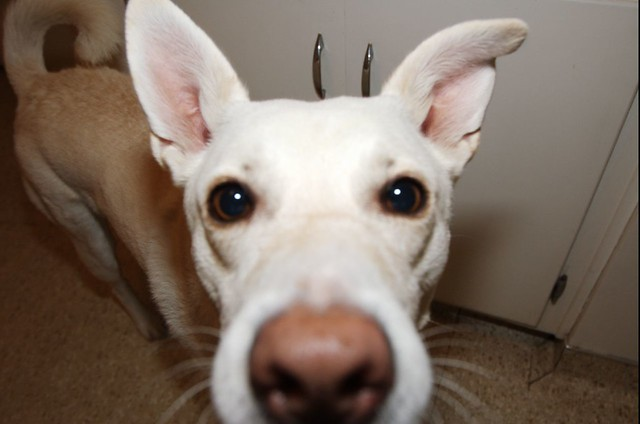 Image Result For Shelly S Dog