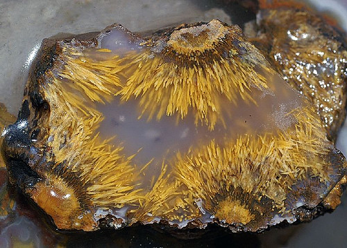 Golden Moss Agate: SAGENITE NEEDLES , POM-POM , THISSLE , FLAME , TREE MOSS