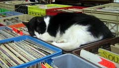 Sleeping cat in a record store.