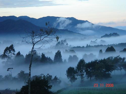 las azul de arboles amanecer campo neblina alto frio montañas antioquia palmas