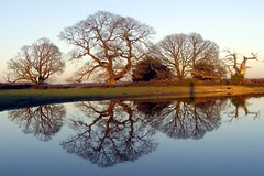 Winter oak reflections 02