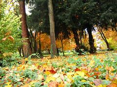 06-11-19_automne_01