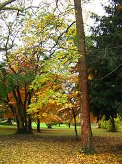 06-11-19_automne_02