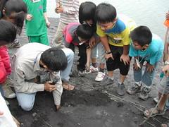 海洋生態教育宣導,帶孩子認識濕地生態。