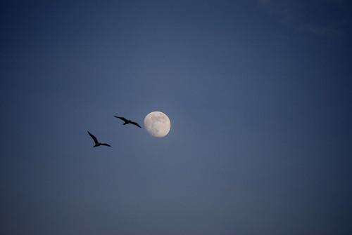Two Birds, One Stone by mariab3bx