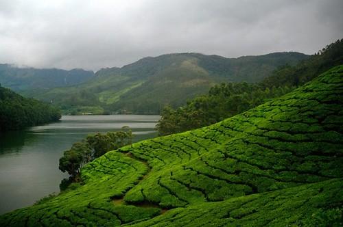 Kerala - Tea by the Lake