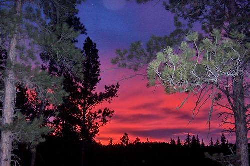 blackhills forest sunrise december evergreens spruce ponderosa deadwood dakotas beautifulearth blackhillsnationalforest