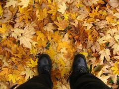 06-11-19_automne_09