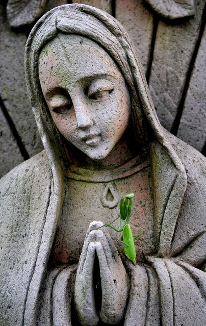 Mantis religiosa. Muy religiosa.