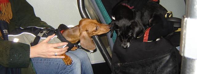 2 koirat raitsikassa