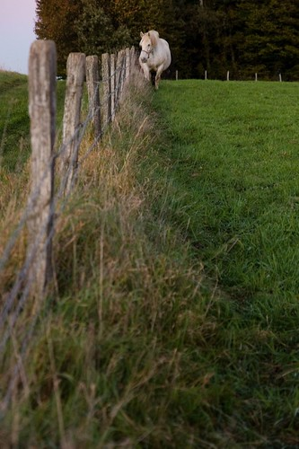 L'herbe est toujours meilleure de l'autre côté