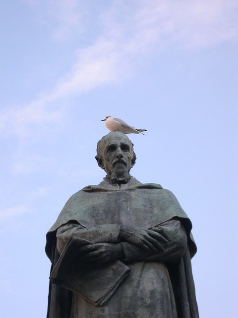 Venezia piccioni e gabbiani