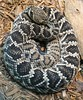 "<a href=""http://www.flickr.com/photos/75905404@N00/401404667/"">Photo of Crotalus adamanteus by OZinOH</a>"
