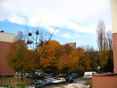 06-11-19_automne_10