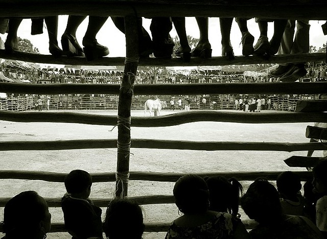 yucatan bullfight 2, Panasonic DMC-FX5