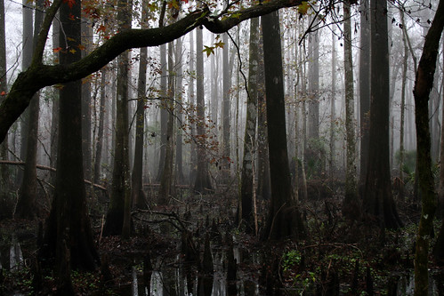 fog florida swamp 10faves lowersuwanneenationalwildliferefuge