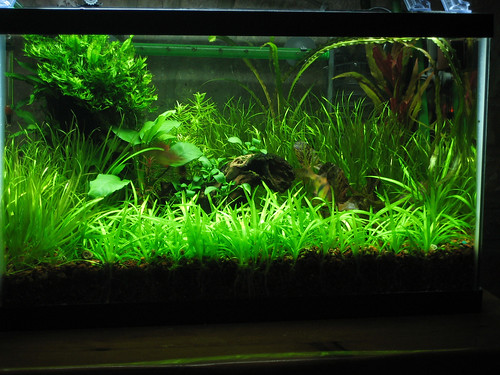 The basics of co2 injection for the planted for Aquarium co2