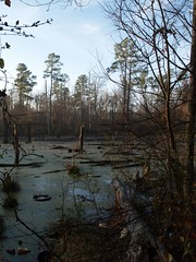 Early AM Swamp1