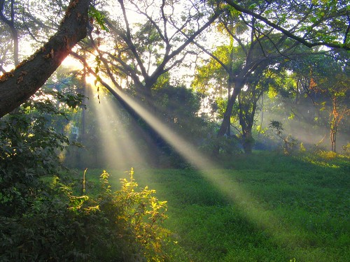 morning trees light sun india green nature sunrise landscape morninglight earlymorning foliage bombay greenery maharashtra psychedelic mumbai streaming colony lightbeams lightstreams lettherebelight suryakiran photosynthesis greenhaven aarey playoflight goregaon stunningdisplay prakashzot hirvegaar sakali