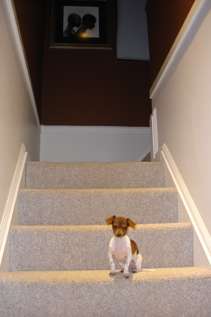 Stairs To Master Bedroom  Cutest Dog Ever, Not Included With House :)