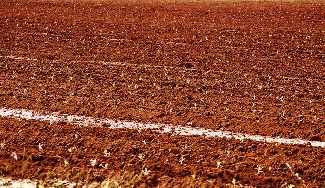 Photo for South carolina soil