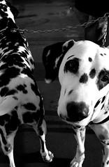puppies #10