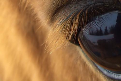 horse reflection eye eyelash arabian instantfave mywinners abigfave beautyintheeye isawyoufirst