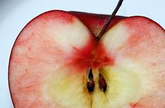 apple pectin for digestive health