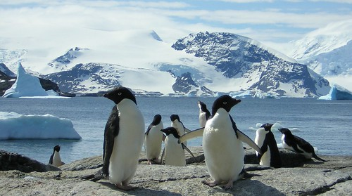 A group of penguins.