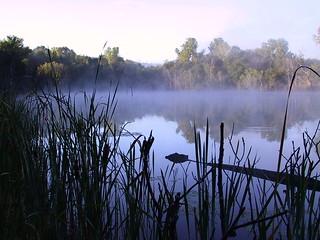 pond fog