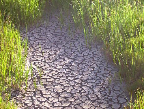 """「干ばつ」は英語で""""drought""""と言います。"""