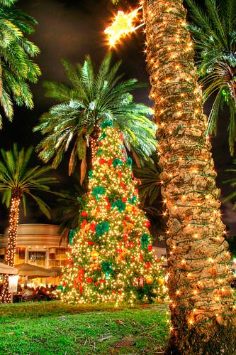 Hochman christmas palm trees