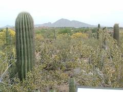 Desert Botanical Garden 13