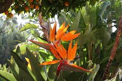 flower, leaf, flora,