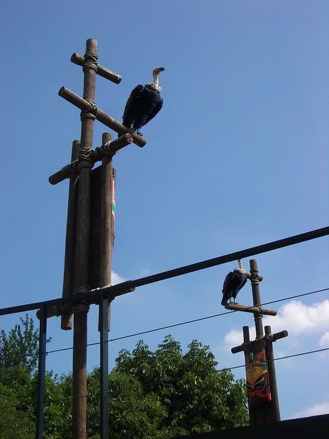 Vulture, Legoland