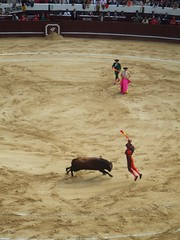 performance(0.0), animal sports(1.0), cattle-like mammal(1.0), bull(1.0), event(1.0), tradition(1.0), sports(1.0), bullring(1.0), performing arts(1.0), entertainment(1.0), matador(1.0), bullfighting(1.0),