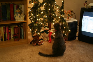 Lucy Regards the Tree