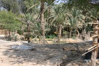 Palmen in einem Museum in der Wüste um Dubai